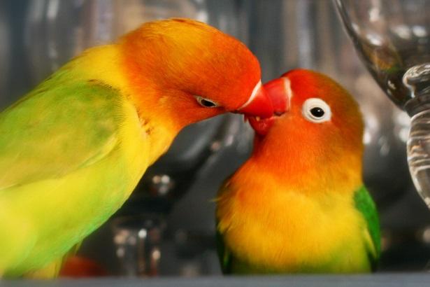 tratamentul artrozei la papagali)