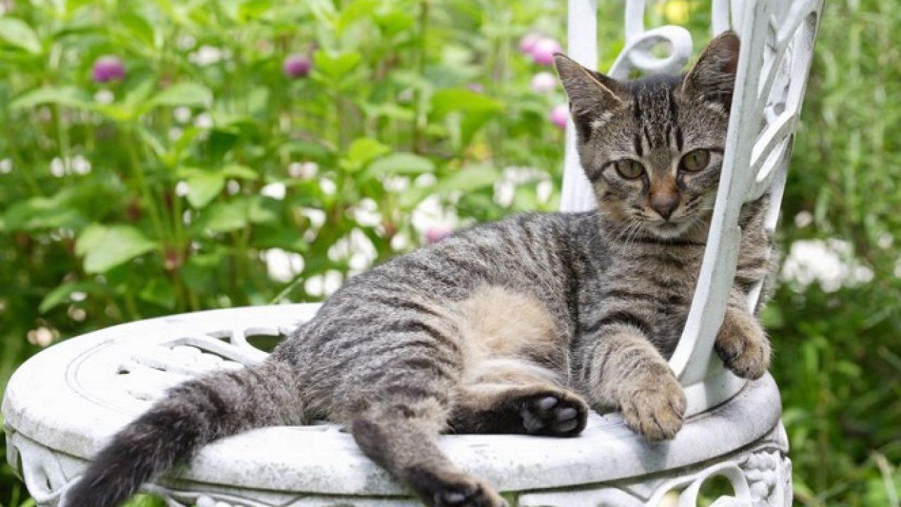 pisica verifică vederea)