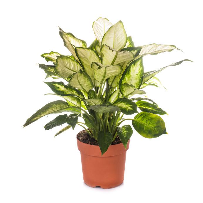 Cele mai periculoase plante de apartament pentru copii for Plante utile