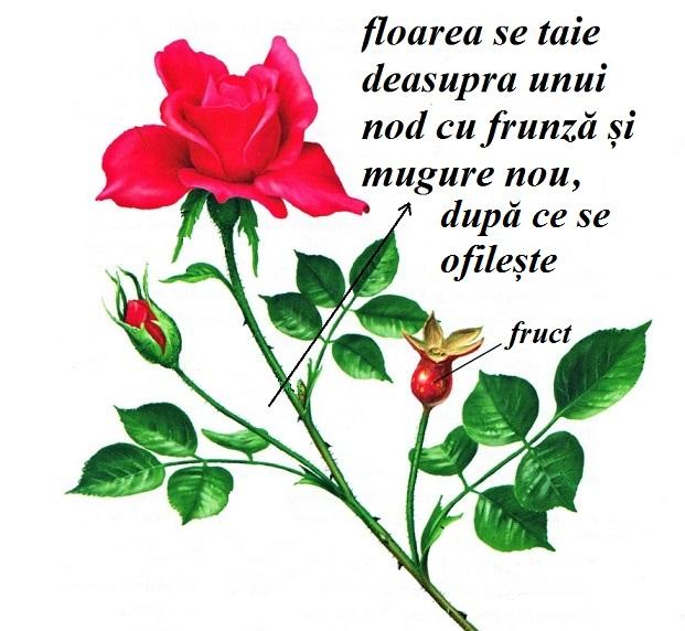 cum tai florile ofilite