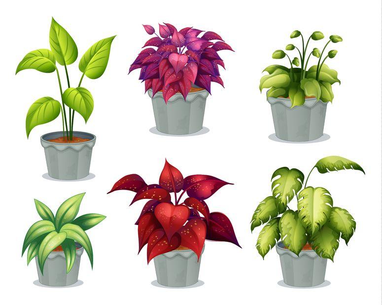 De ce devin lipicioase frunzele plantelor de interior for 6 plantas ornamentales