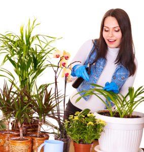 7 sfaturi pentru îngrijirea plantelor de apartament pe timp de iarnă