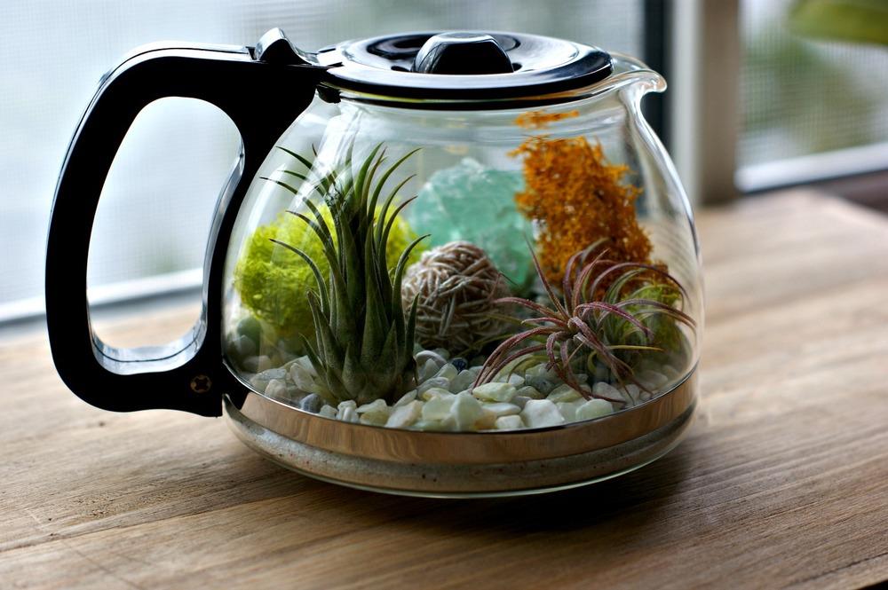 terrarium in ceainic
