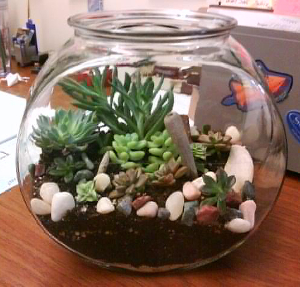 terrarium cu plante suculente