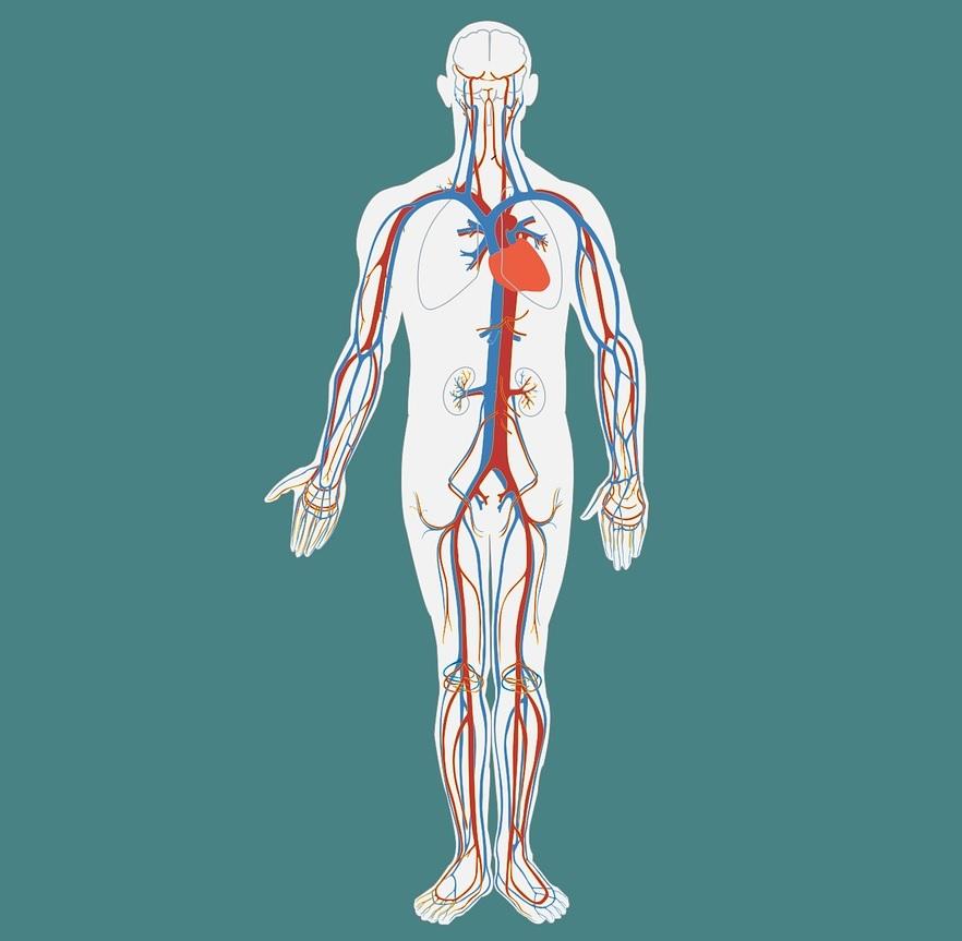 tratarea leziunilor meniscului lateral al genunchiului inflamația articulației degetelor ca simptom al unei boli