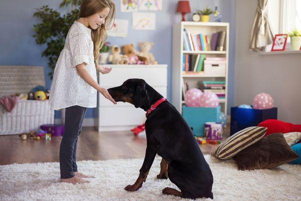 copilul se joaca cu un caine