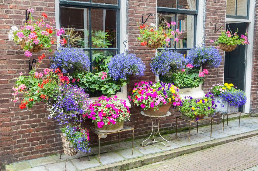 Îmbracă zidul casei cu flori și toată vara vei fi admirată