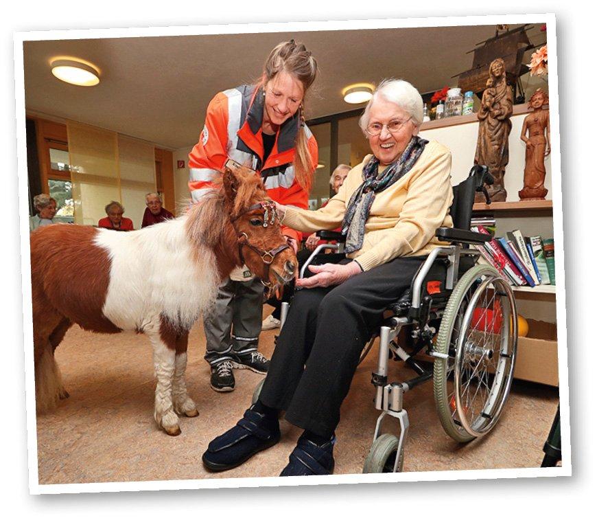 Bătrânii se bucură de terapia cu ponei
