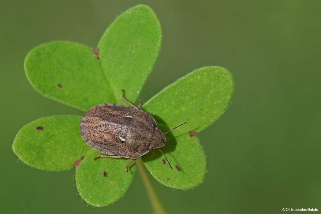 Imagini pentru insect