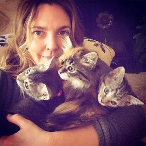 Drew Barrymore pisici