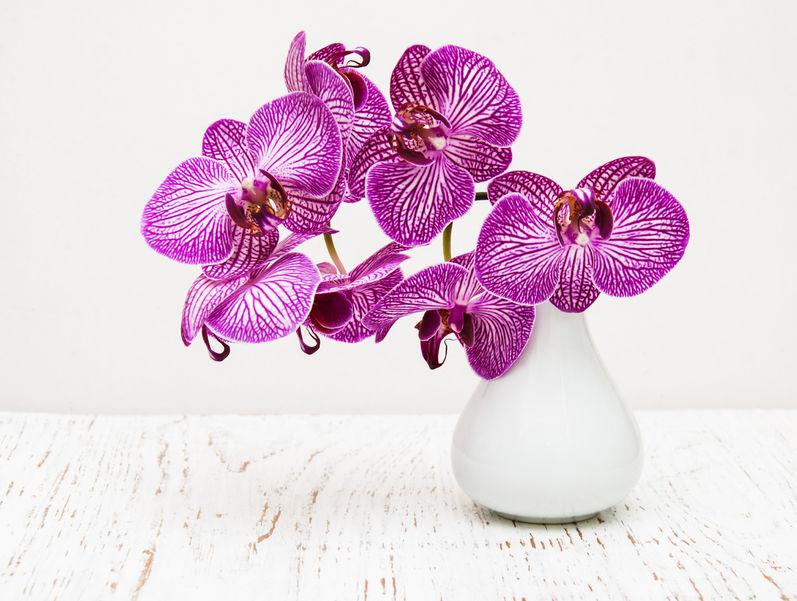 cum se pastreaza orhideele tăiate