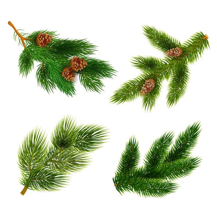 Diverse crengi de conifere, de molid și de pin