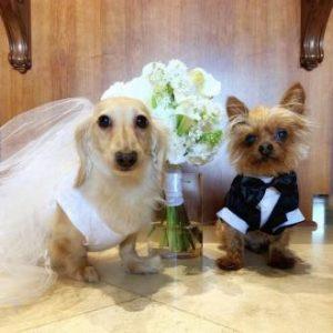 cainii celor doi, gatiti de nunta