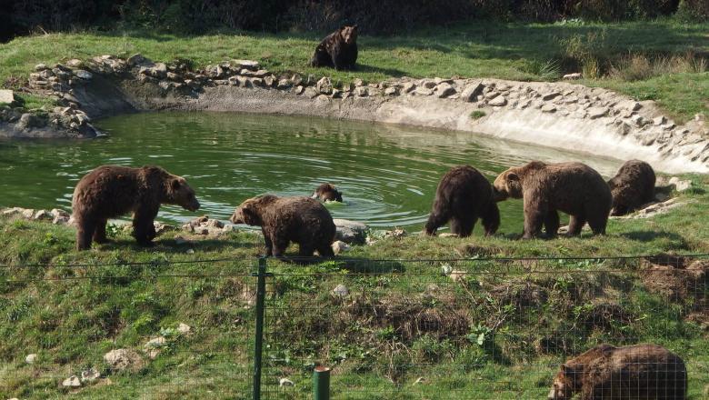 Rezervaţia de urşi de la Zărneşti