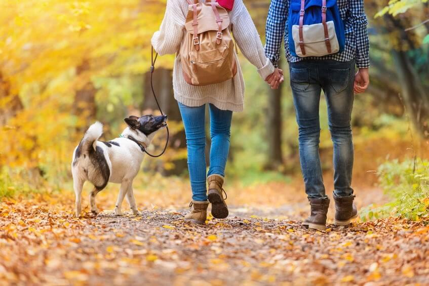 caine plimbare in natura