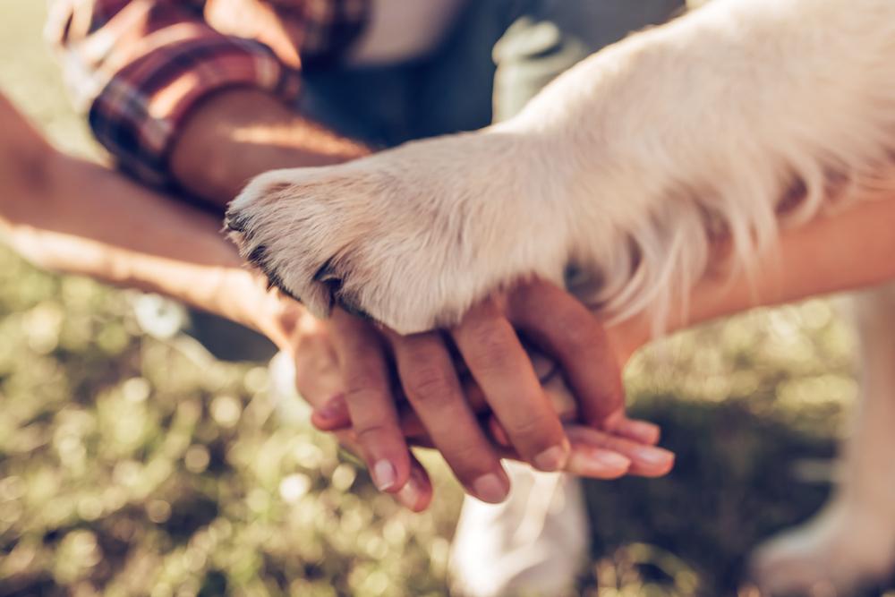 câine versus om