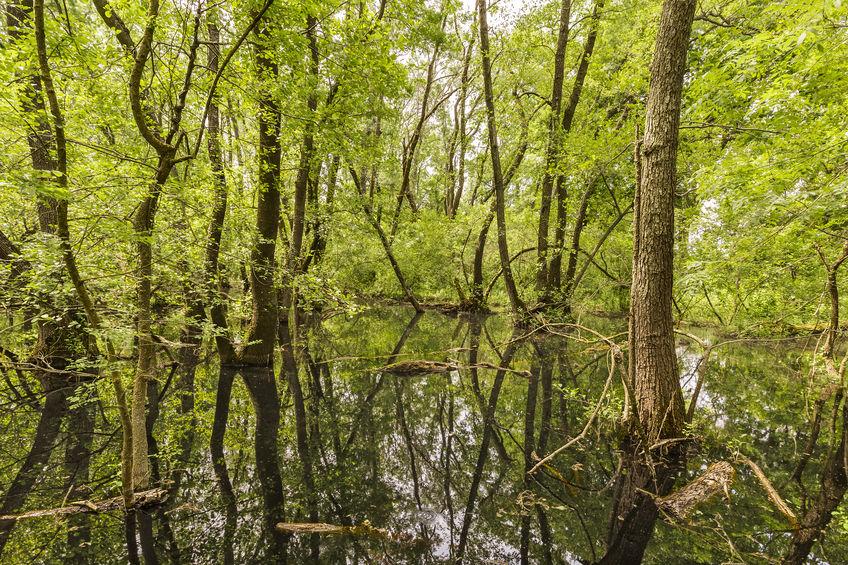 Destinații de vacanță superbe, dar mai puțin cunoscute: Pădurea Letea